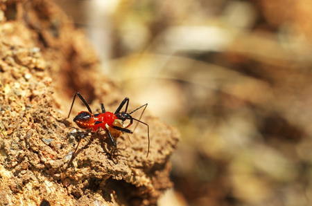 assassin bug is staying on the wood Stock Photo