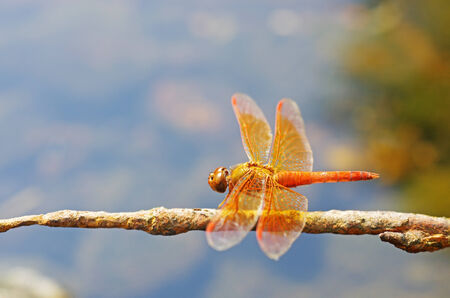 orange winged dragonfly is resting on the pole Stock Photo