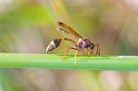potter wasp is resting on the tree branch Stock Photo