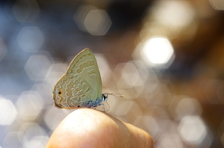 Line-blue Butterfly on human finger with bokeh Stock Photo