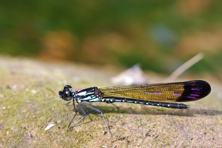 damselfly is standing on the rock