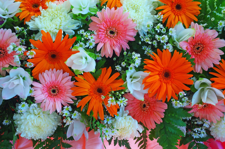 Many flowers included gerbera and chrysanthemum background Stock Photo