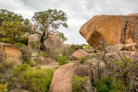 Rocks and Trees in Enchanted Rock State Park, Texas.