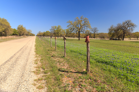A barbed wire fence, with boots on the post, separates the bluebonnets from the road on Willow City Loop, Texas.