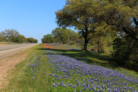 Red and Blue wildflowers grow along the side of a central Texas roadside.
