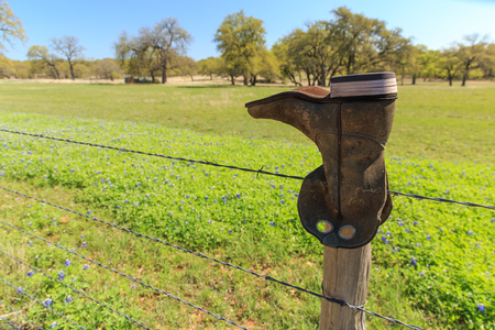 Bluebonnets and Boot A cowboy boot sits on a barbed wire fence post next to Texas wildflowers.