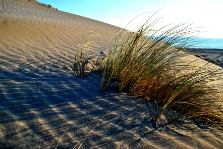 monsul: sand dunes with grasses in san jose,cabo de gata, spain