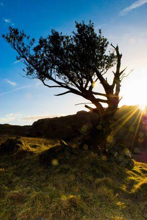 weather beaten: tempo battuto cespuglio cumbrian collina con accecante sole