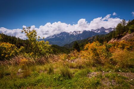 Mountain forest in clouds landscape.