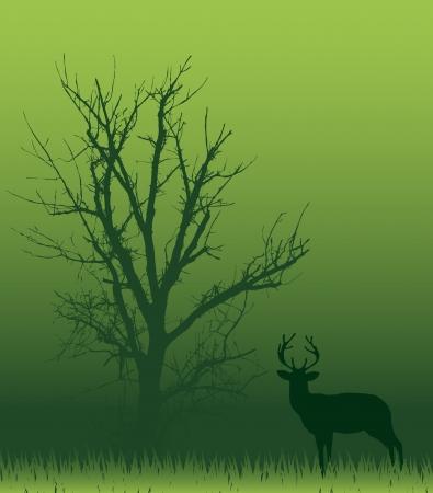 moor: Forest