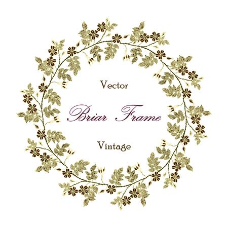 eglantine: Vector round frame with the briar (brier). Vector delicate eglantine frame. Vintage template card. Save the date vector circular illustration. Illustration