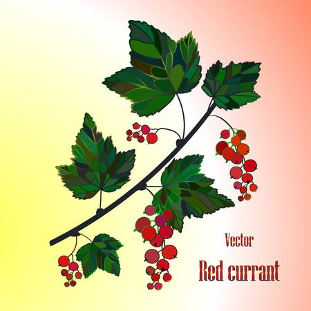 currant: Red currant composition, currant Leaves, currant Vector, berry illustration of Currant branch. Currant Isolated. Bunch of garden berries.