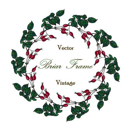eglantine: Vector round frame with the briar brier . Vector colored red green eglantine frame. Vintage template card. Save the date vector circular illustration. Illustration