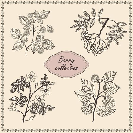 briar: Collection of hand drawn berries isolated on gentle background. raspberry, rowan, rose hip  - briar.