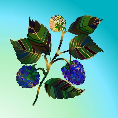 blackberry: Color vector blackberry branch with blue berries. Vector illustration. Stock Photo