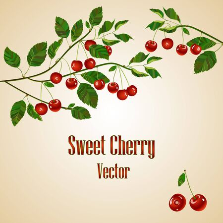 Cherry compositions. Cherry card with place for your text. Cherry branch. Vector. Cherry isolated on white background. Illustration