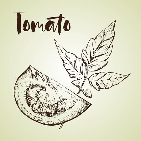 Vector tomato handdrawn seamless pattern in the style of engraving.