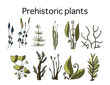 Prehistoric vector plants. Differenr extinct greenery, Cartoon botanical rainforest set.