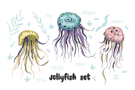 Jelly fish vector set. Sea animal vector collection. Marine hand drawn tropical animals. Perfect for pront and web. Ilustrace