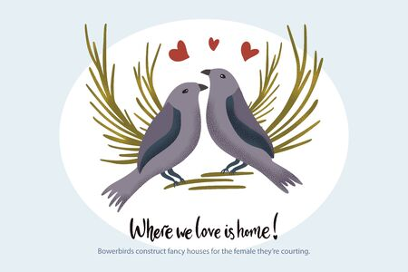 Happy valentine day vector textured bowerbird animal card in a flat style with quote and real facts about love. Romantic bird couple illustration. Illusztráció