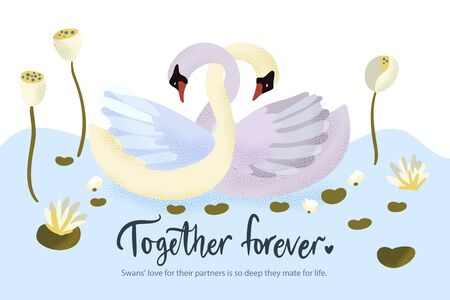 Happy valentine day vector textured card with two swan bird animal swimming in water lily lake. Romantic illustration in a flat style with quote and real facts about love.