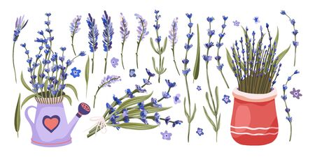 Provence floral vector set. Big flat natural flower plant bouquet collection with lavender in a pot and isolated flower botanical elements. Çizim