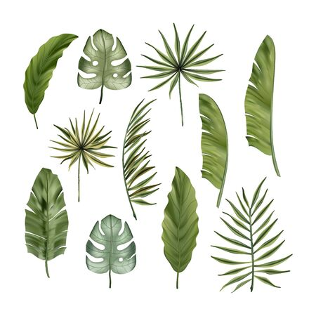 Realistic colorful tropical monstera, banana palm leaves and monstera vector set. Jungle botanical summer collection. Exotic green nature wallpaper.
