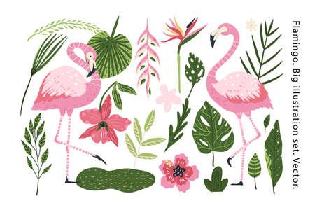 Flamingo vector cartoon animal set. 向量圖像