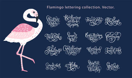 Summer lettering flamingo girly vector set.