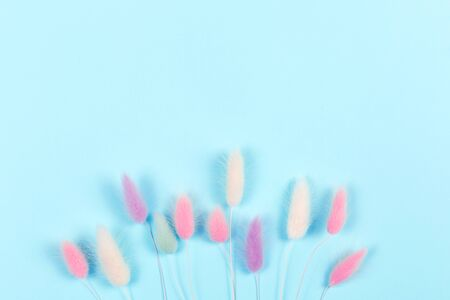 Blue background with colorfull spikelets. Copy space.