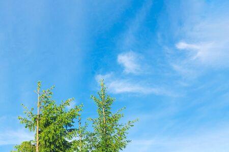 Fir treetops against blue summer sky. Soft selective focus. Back to basics concept. Banco de Imagens