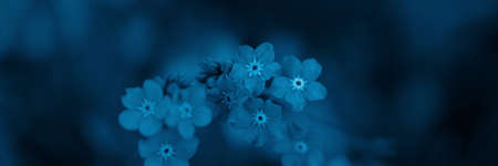 Toned image of forget-me-not flowers. Blue color. Soft selective focus. Floral banner for website Banco de Imagens