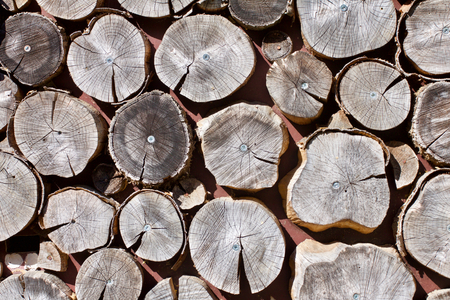 forestry: Full frame of sawed log ends as background with copy space for concept about fuel, nature or the forestry industry