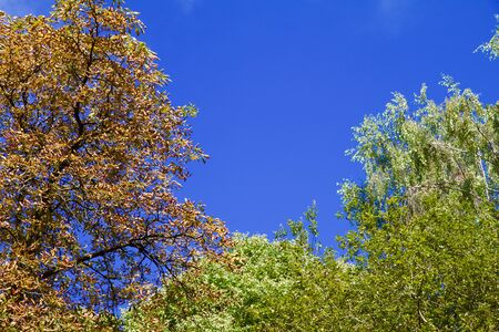Trees in autumn in front of blue sky in a park in Germany Stock Photo