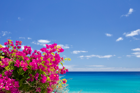 Bougainvillea in front of the sea Stock Photo