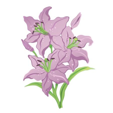 holliday: Three purple lilies Illustration