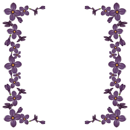 lilac flower: Frame from detailed realistic lilac flowers Illustration