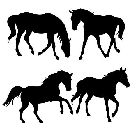 Silhouettes of horses isolated on white background  Vector Illustration