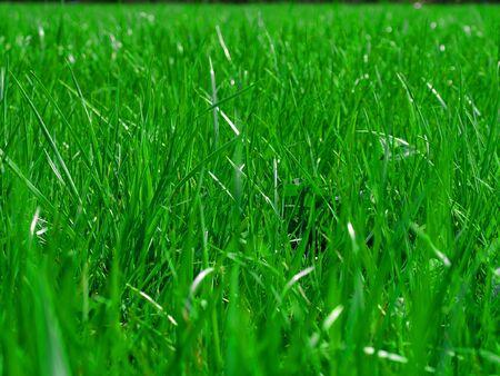 apri: green grass