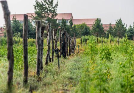 farmland: fence in the farmland