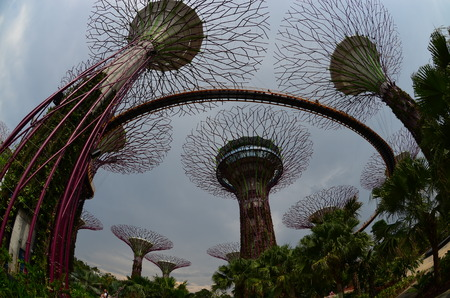 Low angle shot of Gardens by the Bay, Singapore