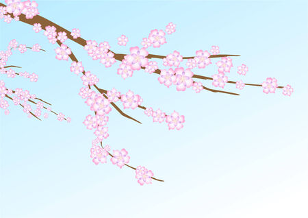 navy blue background: Vector illustration with sakura (cherry blossom) branch on the navy blue background