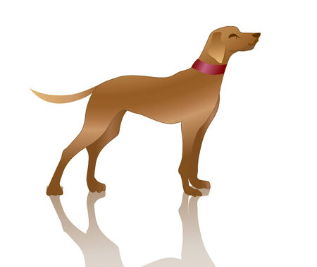 Vector illustration of playful dog and his shadow. Vector