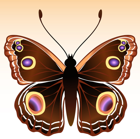 Vector Illustration of detailed Brightly coloured butterfly. Vector