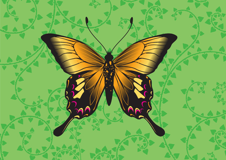Vector Illustration of detailed Brightly coloured butterfly on the funky green background. Vector