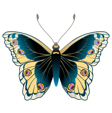 monarch: Vector Illustration of detailed Brightly coloured butterfly.