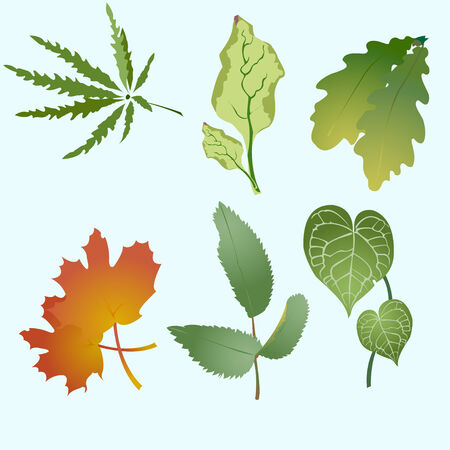 Vector illustration set of design leaves silhouettes    Vector