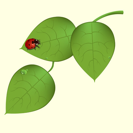 Vector illustration of  funky ladybug sitting on the green leaves Vector