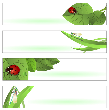 Vector illustration of  Beautiful Spring Banners or Backgrounds with funny ladybugs and dragonflies Vector