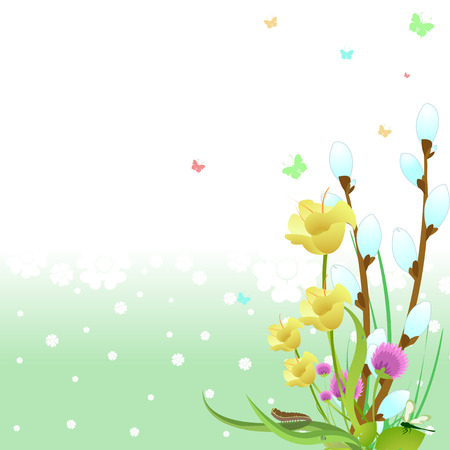 Vector illustration of spring Elegant design with flowers, butterflies and pussy-willow Stock Vector - 4724838